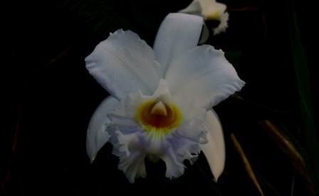 The Orchids of Ecuador