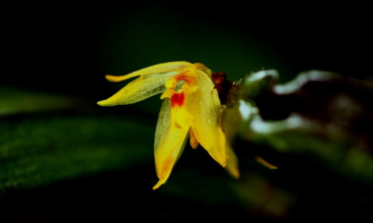 The Orchids of Ecuador