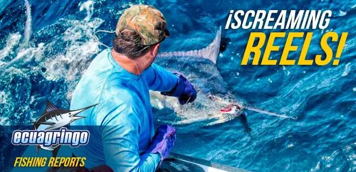 2016 – Ecuagringo Marlin Report Sept 1-5, 2016