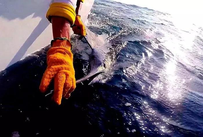 Mid November Fishing Report