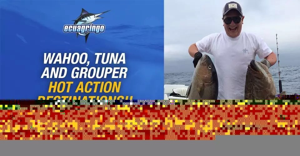 Wahoo, Tuna and Grouper Hot Action Destinations!!