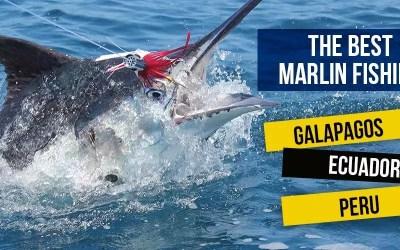 The Best Marlin Fishing in the Galapagos, Ecuador and Peru!