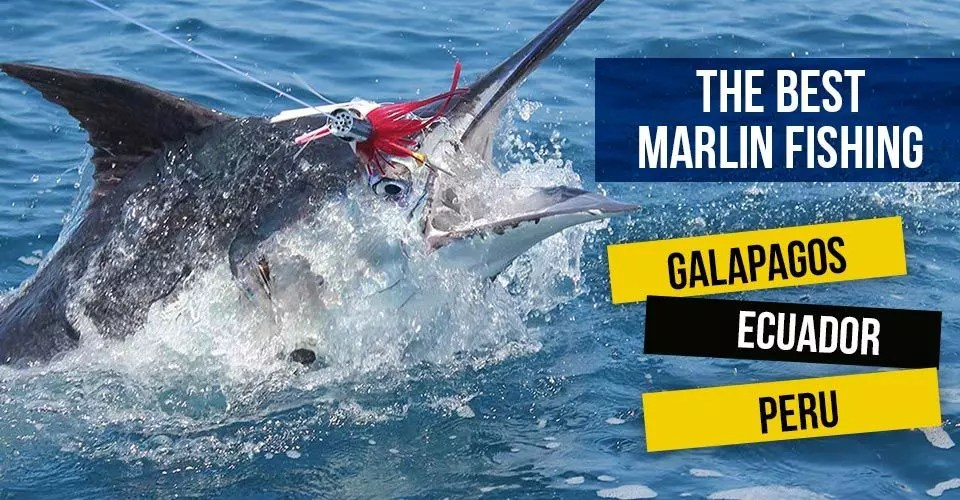 The Best Marlin Fishing in the Galapagos, Ecuador and Peru!