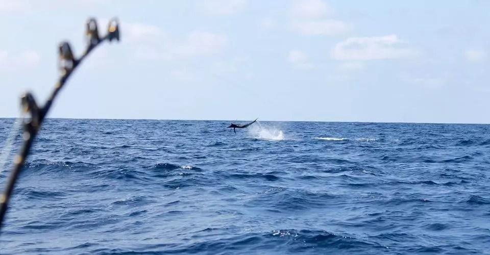 Marlin & Tuna Fishing Report Galapagos, Ecuador & Peru