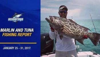 Marlin & Tuna Fishing Report - January 14 - 23, 2017 - Ecuagringo