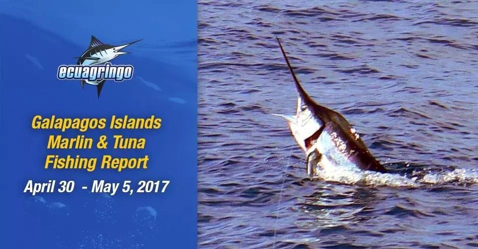 Marlin & Tuna Report, April 30 to May 5, 2017