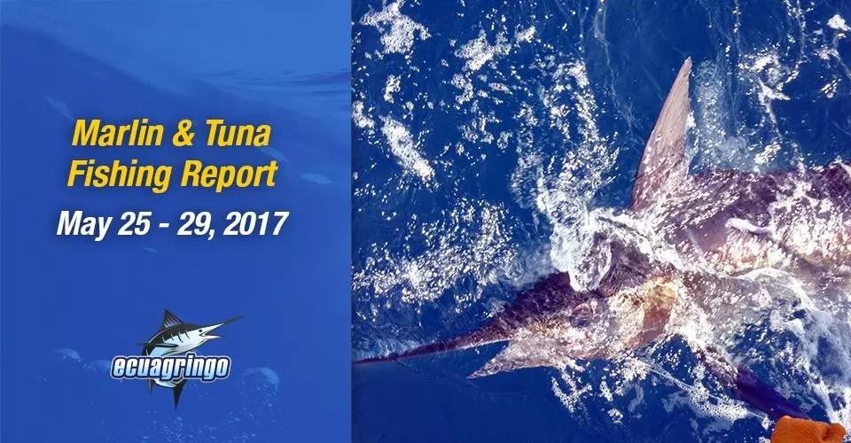 Ecuagringo Marlin & Tuna Report, May 25 – 29, 2017