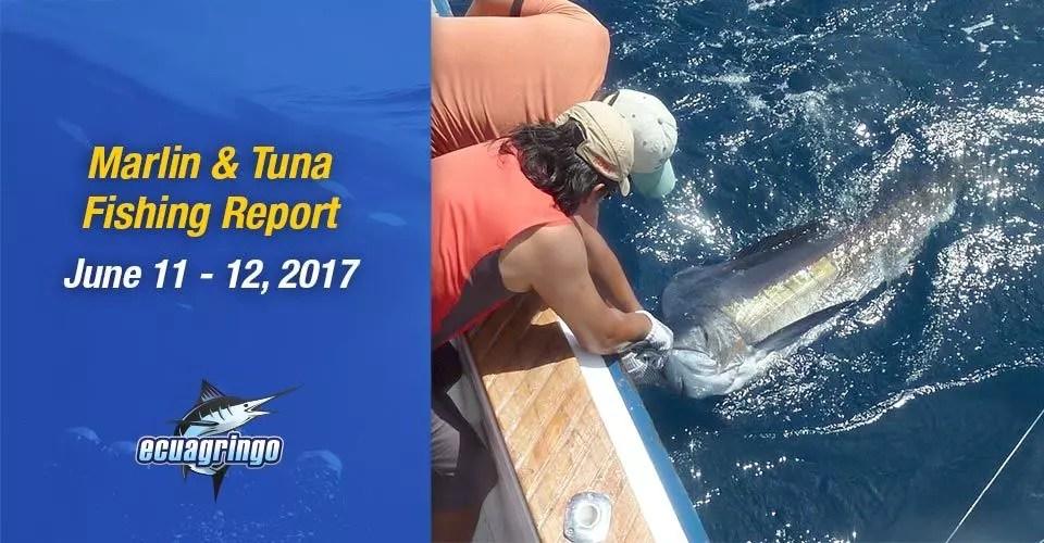 Marlin & Tuna Fishing Report, June 11-12, 2017