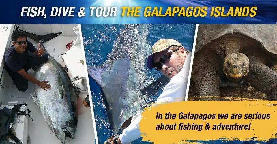 Fish, Dive & Tour The Galapagos Islands