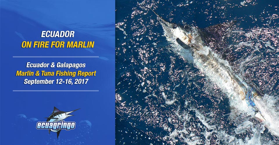 Ecuador On Fire for Marlin