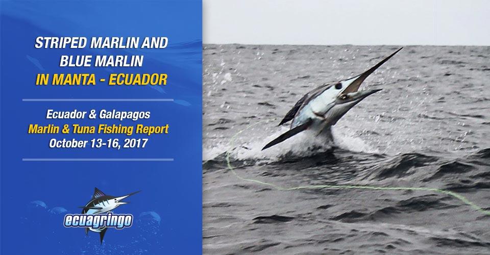 Striped Marlin and Blue Marlin in Manta - Ecuador