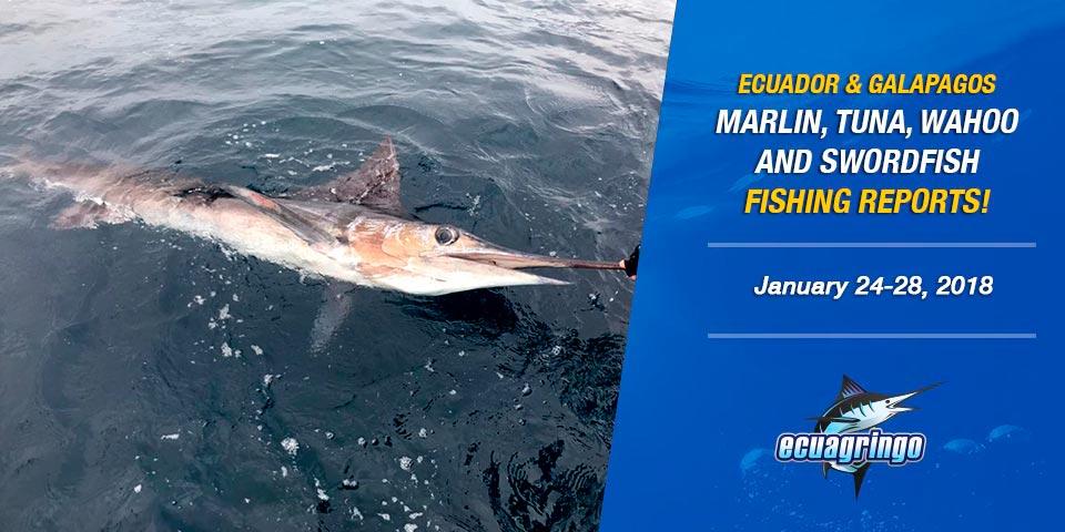 Ecuador and The Galapagos Island Marlin Bite Is Fantastic!