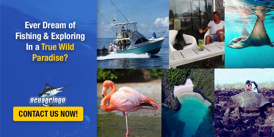 Ever Dream Of Fishing & Exploring In a True Wild Paradise?