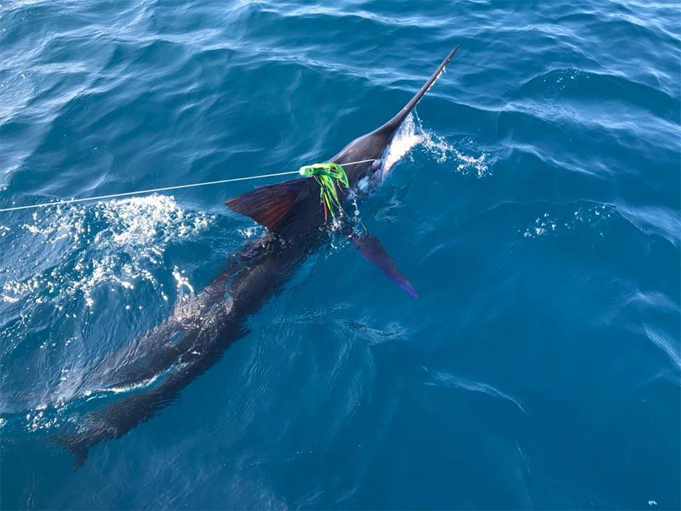 fishing reports 20180213 marlin tuna wahoo swordfish ecuador galapagos manta 05