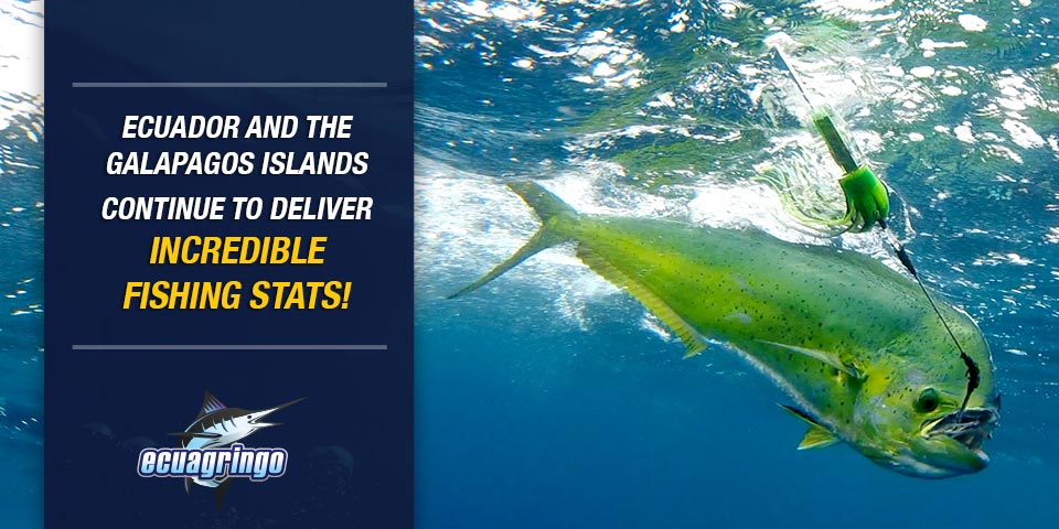 Ecuador and the Galapagos Islands Continue to Deliver Incredible Fishing Stats!