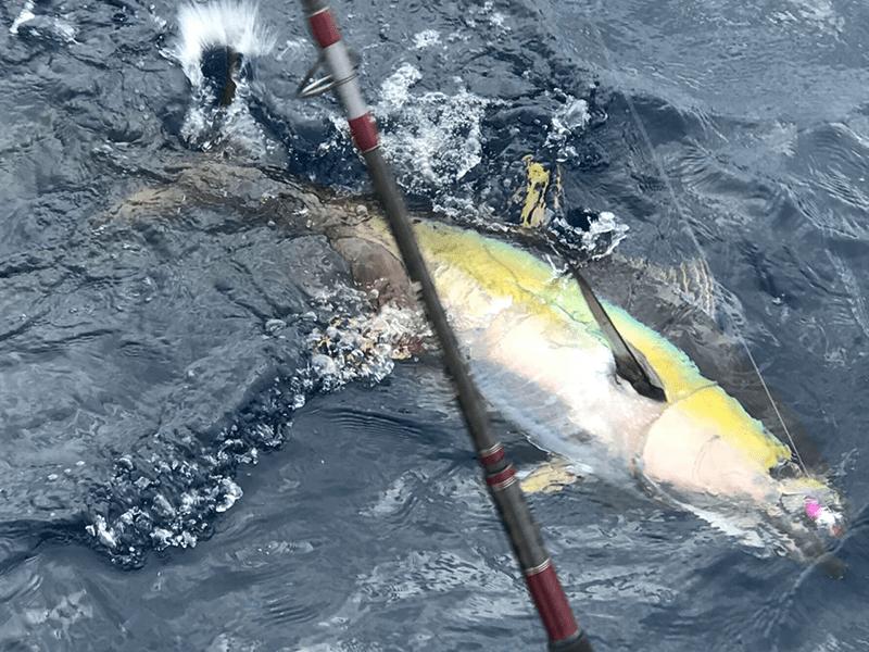 fishing reports 20180302 marlin tuna wahoo swordfish ecuador galapagos manta 05