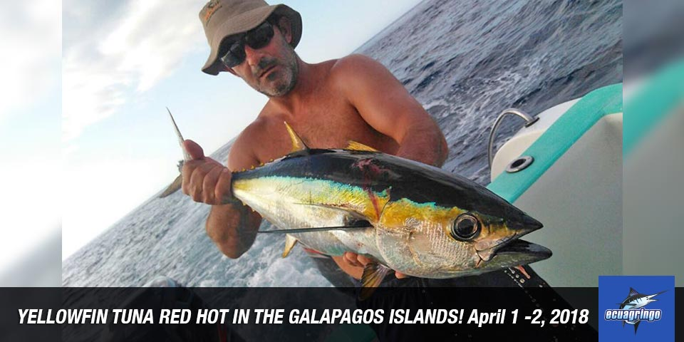 fishing reports 20180405 marlin tuna wahoo swordfish ecuador galapagos manta 01