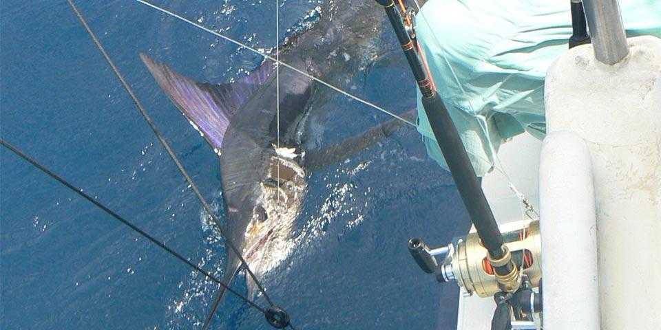 fishing reports 20180509 marlin tuna wahoo swordfish ecuador galapagos manta 01