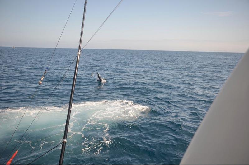 fishing reports 20180515 marlin tuna wahoo swordfish ecuador galapagos manta 03 tesoro