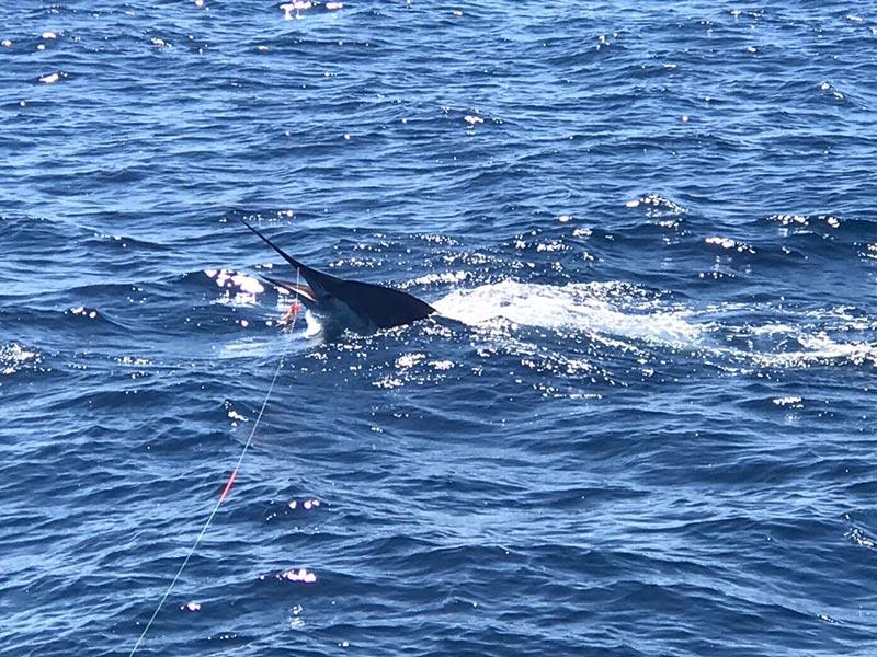 fishing reports 20180518 marlin tuna wahoo swordfish ecuador galapagos manta 04