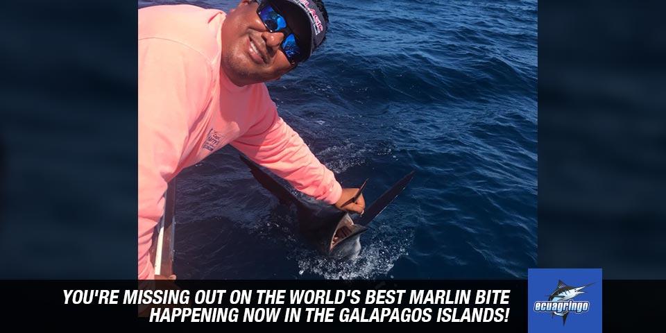 fishing reports 20180525 marlin tuna wahoo swordfish ecuador galapagos manta 01