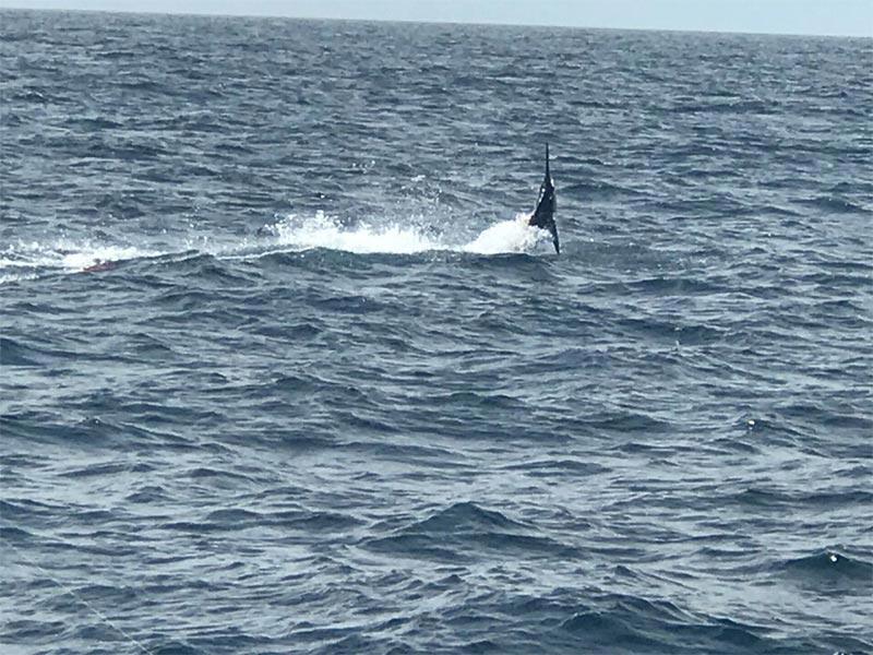 fishing reports 20180525 marlin tuna wahoo swordfish ecuador galapagos manta 02