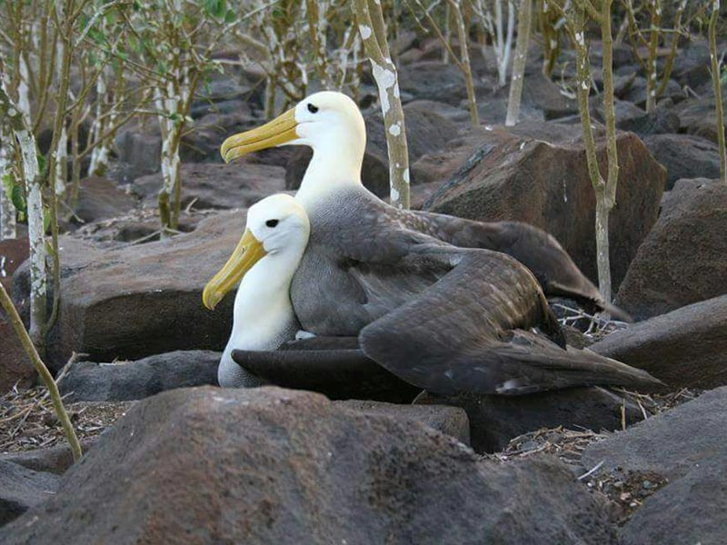 newsletter 20180625 galapagos islands 02