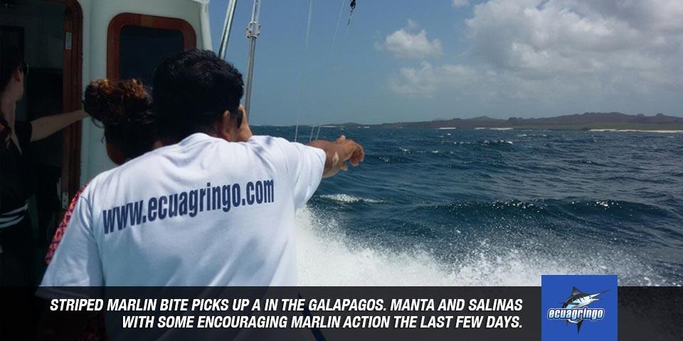 fishing reports 20180811 marlin tuna wahoo swordfish ecuador galapagos manta 00