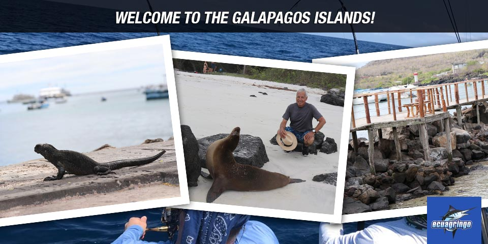 newsletters 20180705 galapagos 01