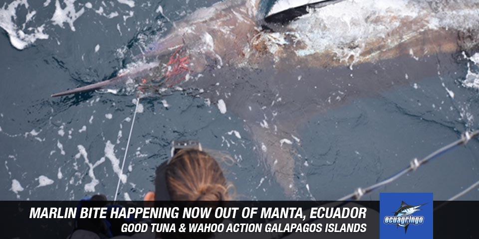 fishing reports 20180923 marlin tuna wahoo swordfish ecuador galapagos manta 00