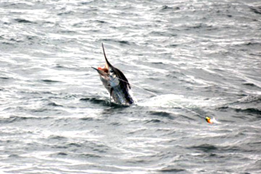fishing reports 20180923 marlin tuna wahoo swordfish ecuador galapagos manta 01