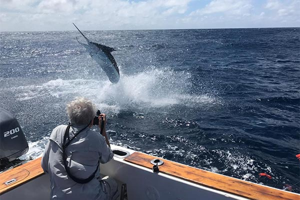 marlin fishing report 20181229 03