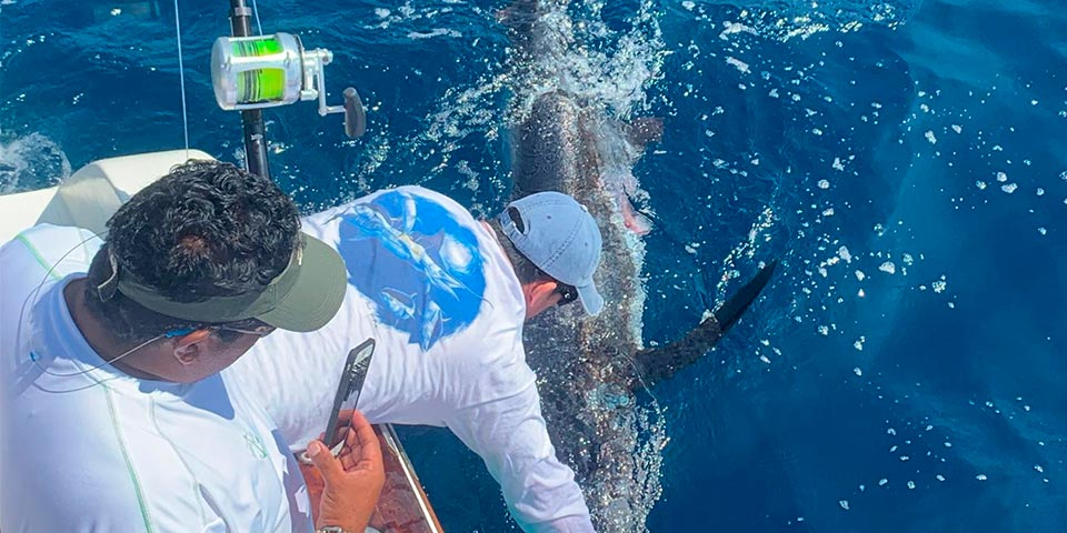 marlin fishing report picture 20190329-01