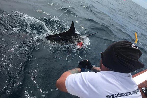 ecuagringo marlin fishing report 20190627 02