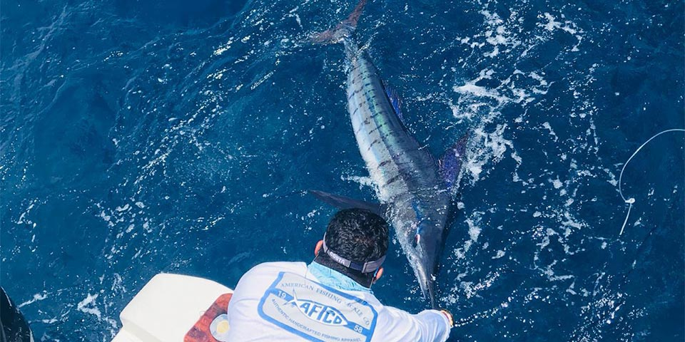 Offseason Marlin Bite Continues To Impress In Galapagos Islands