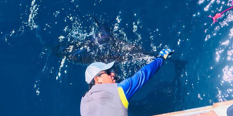 Rough seas but some big striped marlin and hot wahoo action