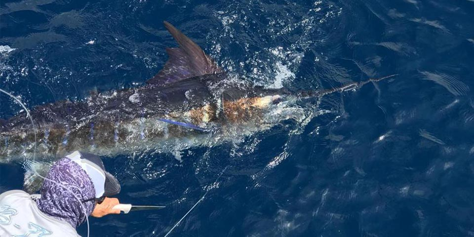 promotion marlin fishing 20190917 00
