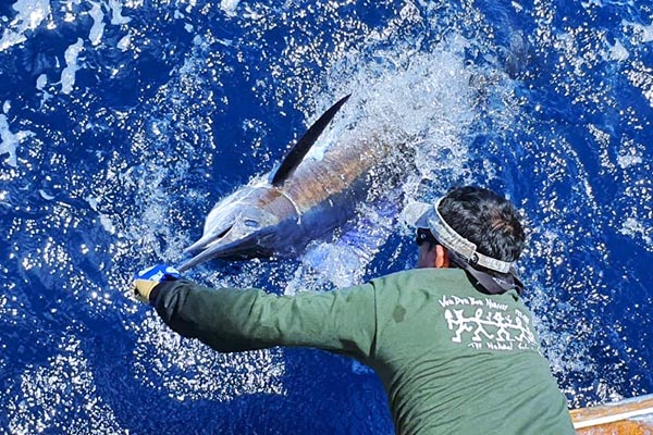 ecuagringo marlin fishing report 201910190 04
