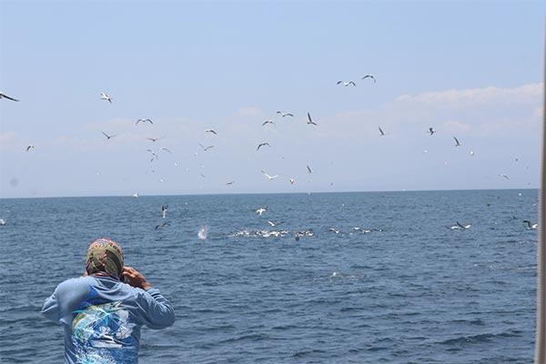 promotion marlin fishing 20191005 02