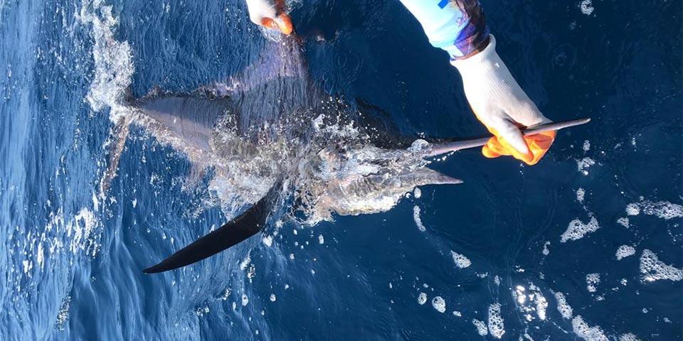 promotion marlin fishing 20191103 00