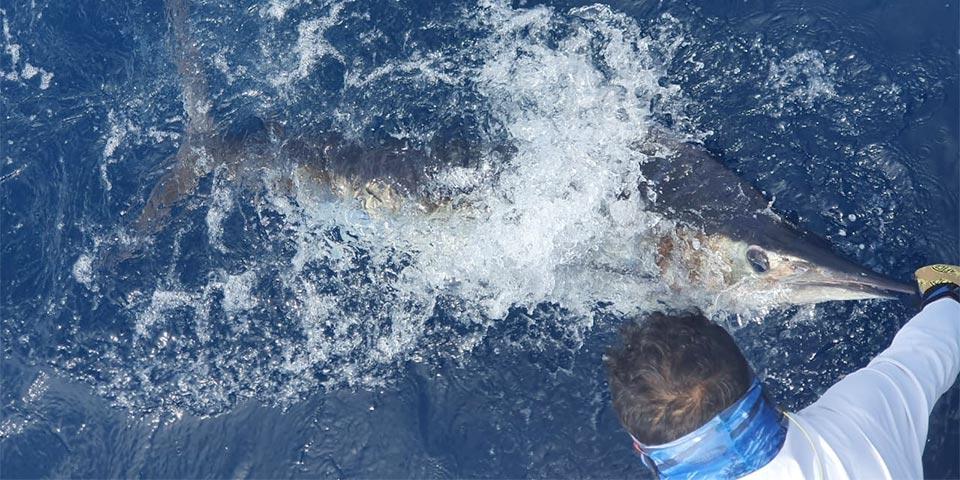 promotion marlin fishing 20200209 01