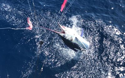 102 Marlin Raised By Two Boats January 7, 2020