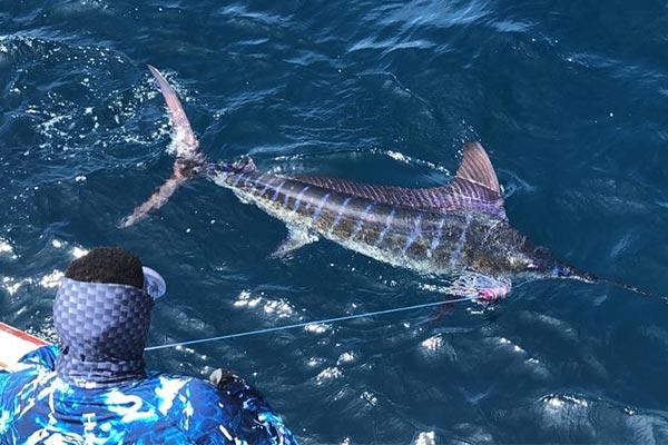 ecuagringo marlin fishing-report 20200119 02
