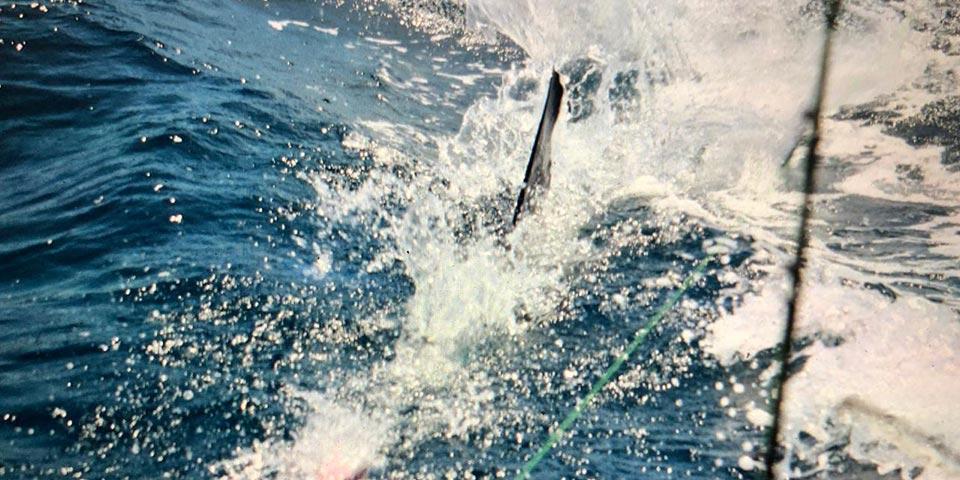 ecuagringo marlin fishing report 20200124 01