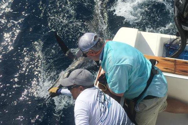 ecuagringo marlin fishing report 20200305 03