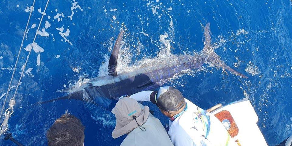 blog galapagos fishing 20200530 01