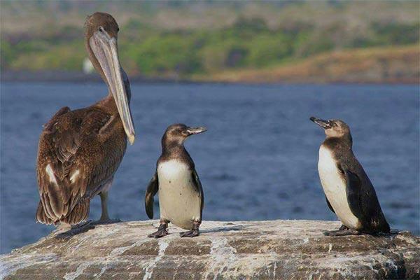 blog galapagos wildlife 20200513 01