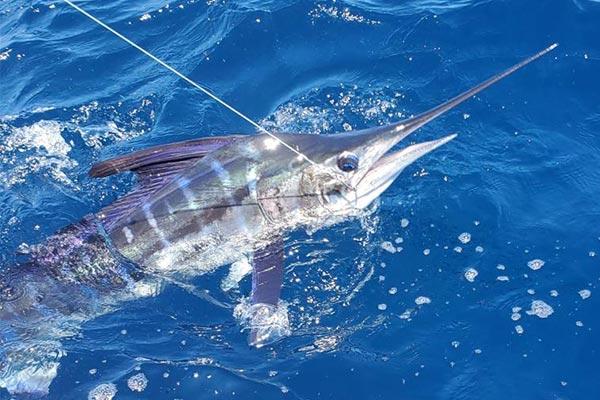 special fishing galapagos islands 20200814 02