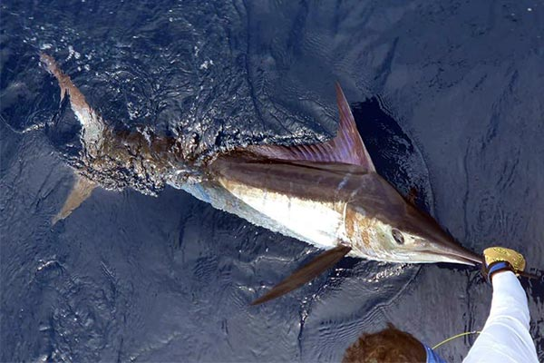 Galapagos Islands Are Open For Fishing & Touring