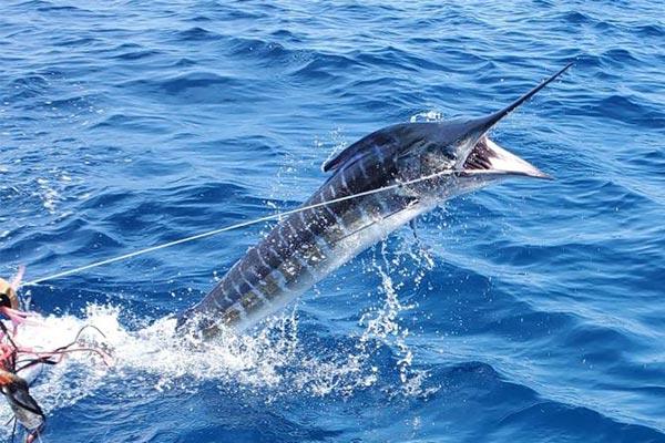 blog fishing galapagos islands 20200908 02